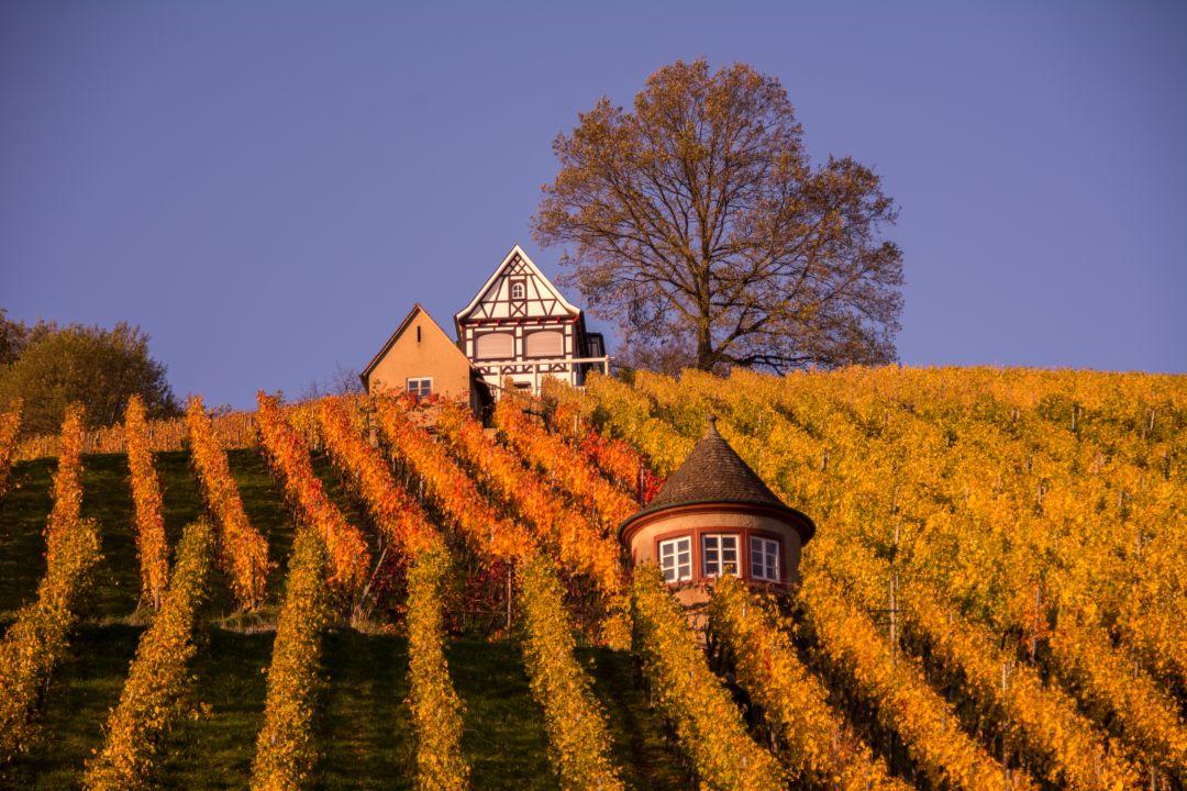 wijngaard Duitsland