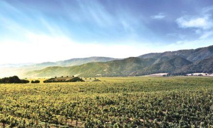 Amerikaanse wijnen van Walraven Sax
