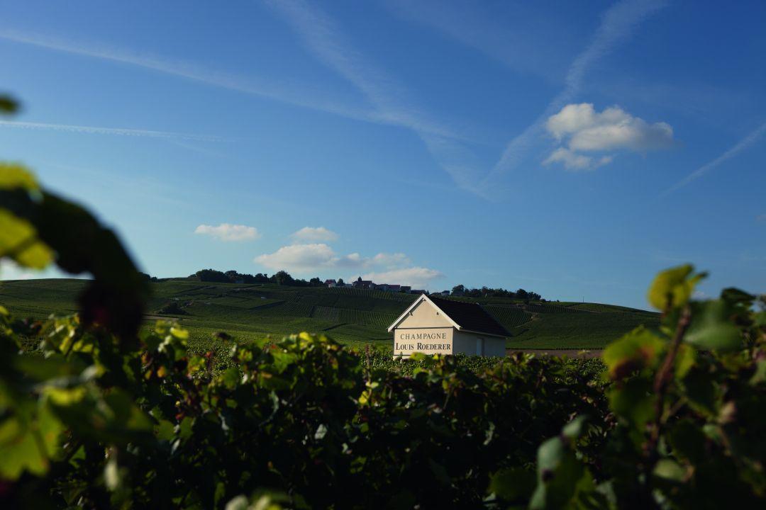 wijngaard Roederer