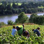 Is de Loire het meest gevarieerde wijngebied ter wereld?