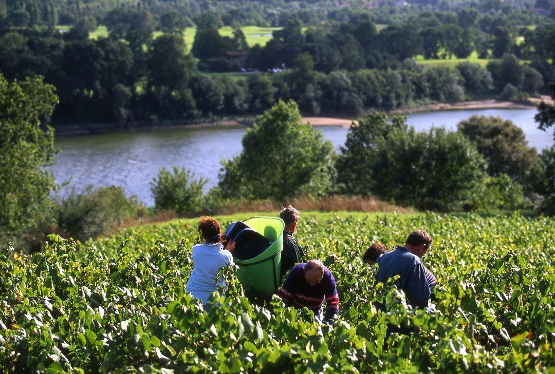 Loire oogst