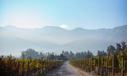 Johan Monard, Ad Bibendum, over de nieuwe Chileense wijnen