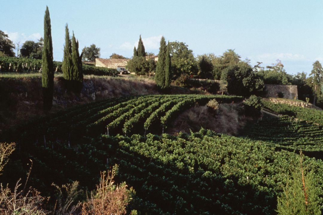 Tertre Roteboeuf wijngaard
