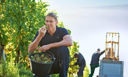 'Wijnmaken is een ambacht, geen kunst'