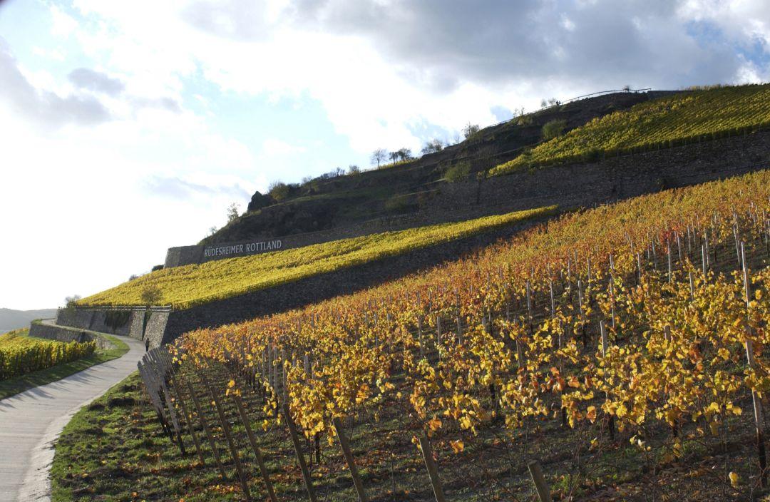 Wijngaarden in Rüdesheim