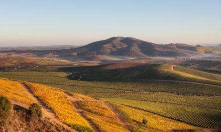 De nieuwe wijnen van Chili