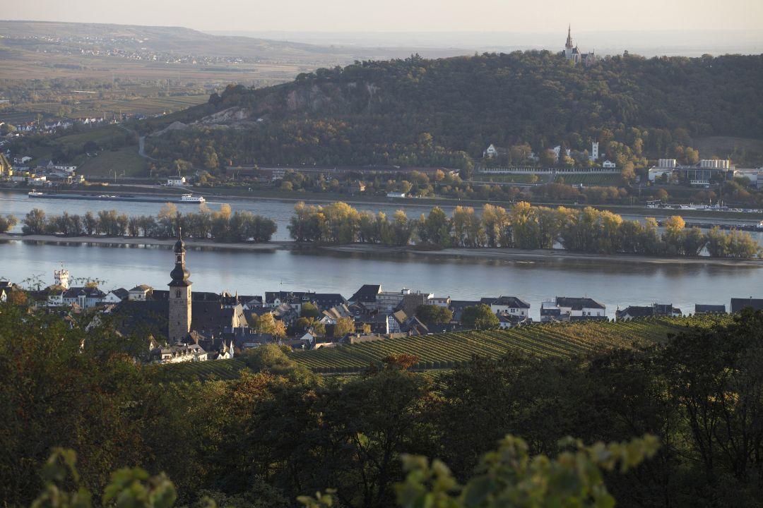 wijngaarden bij Rüdesheim 2