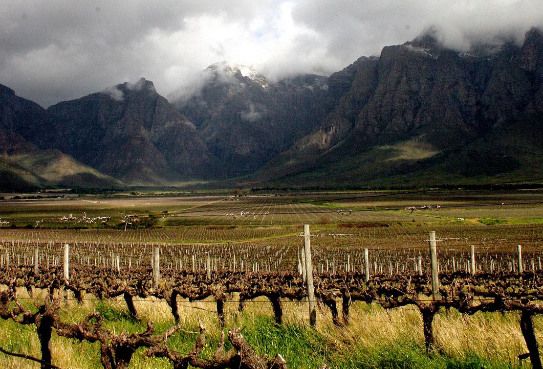 Wijngaarden in Breedekloof