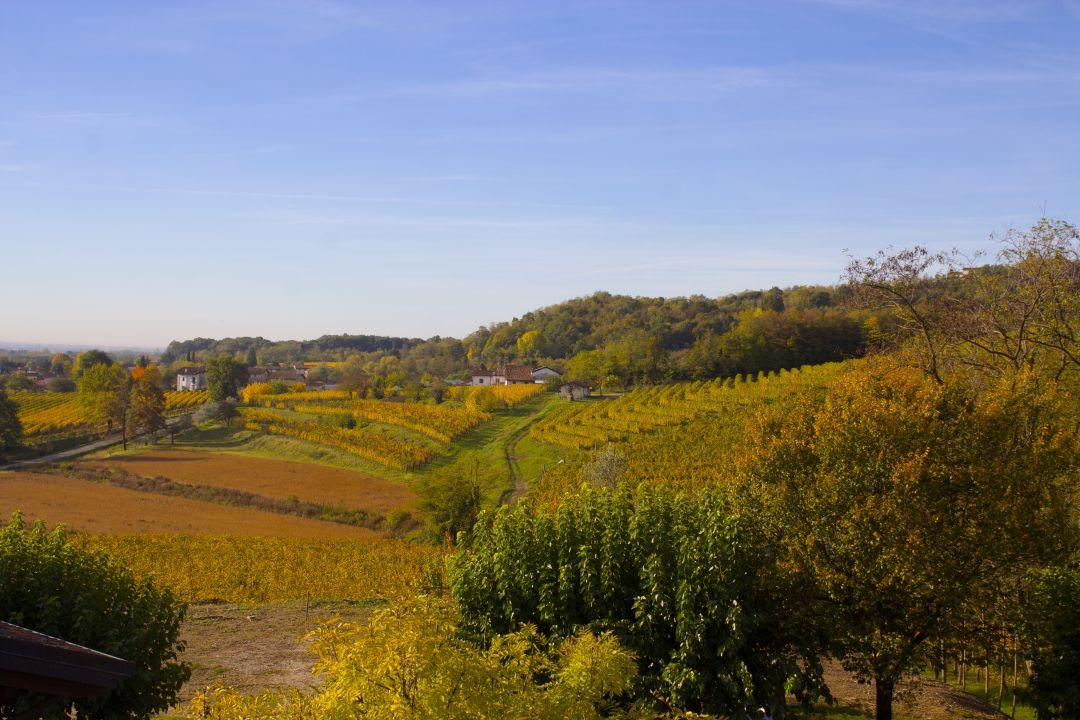wijngaarden Gigante