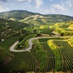 Wordt Landwein de nieuwe Duitse cultwijn?