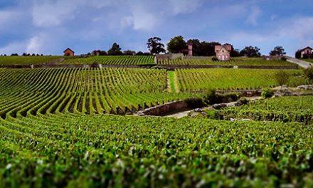 Modern Europees van Bâtard/Wijnhandel Koninginneweg