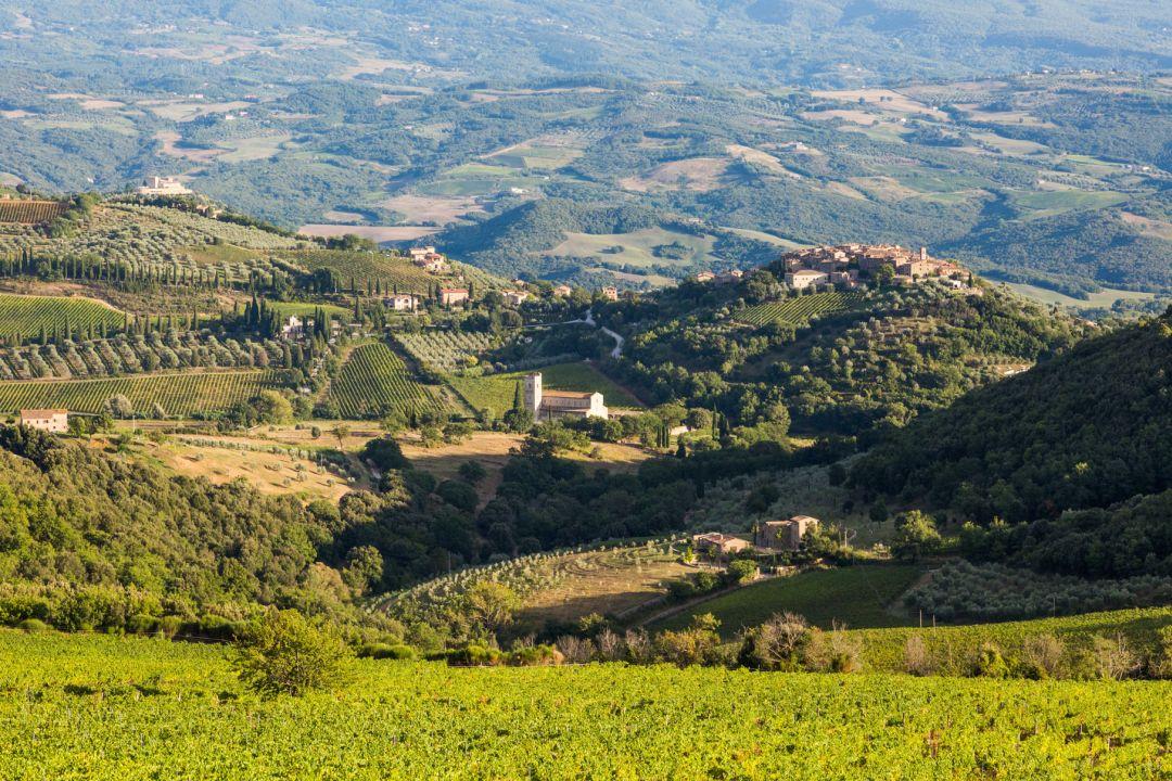 wijngaarden Montalcino