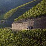 Benefietproeverij voor de Ahr-wijnbouwers