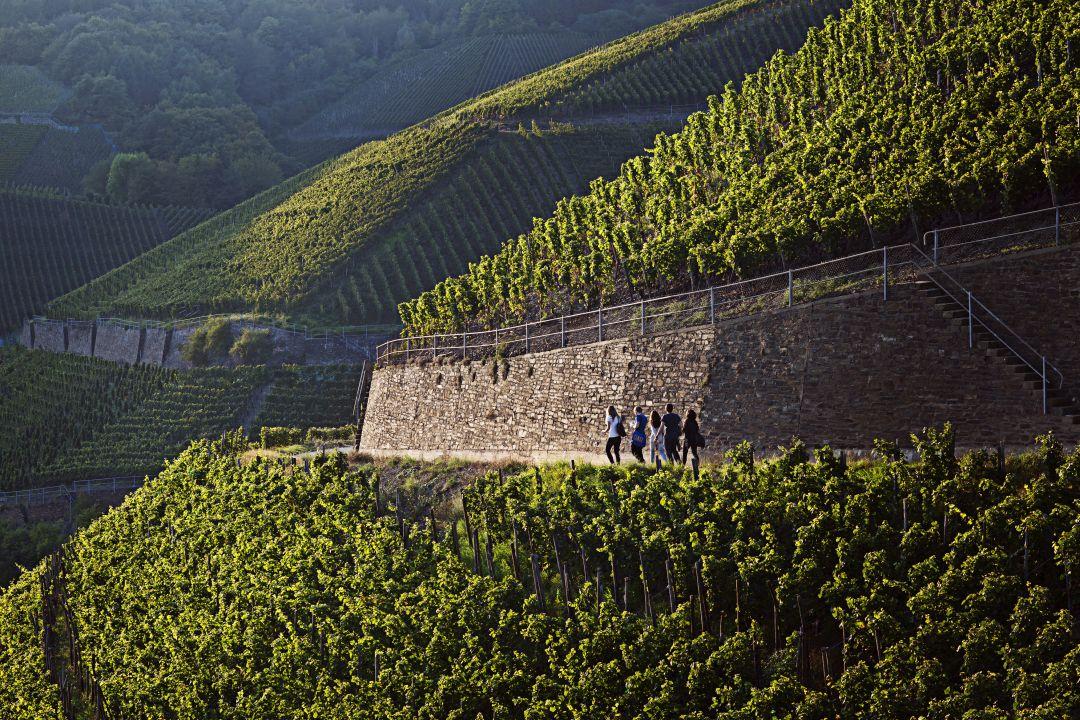 ahr wijngaarden