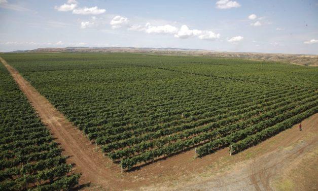 Savalan – Aspi Winery, Azerbeidzjan