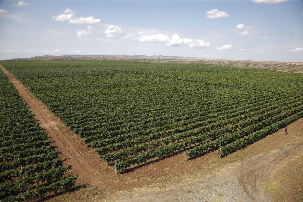 savalan wijngaarden