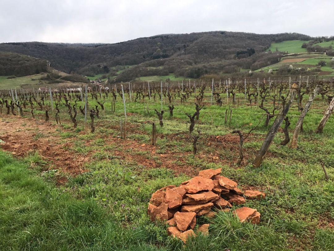 Labet wijngaard