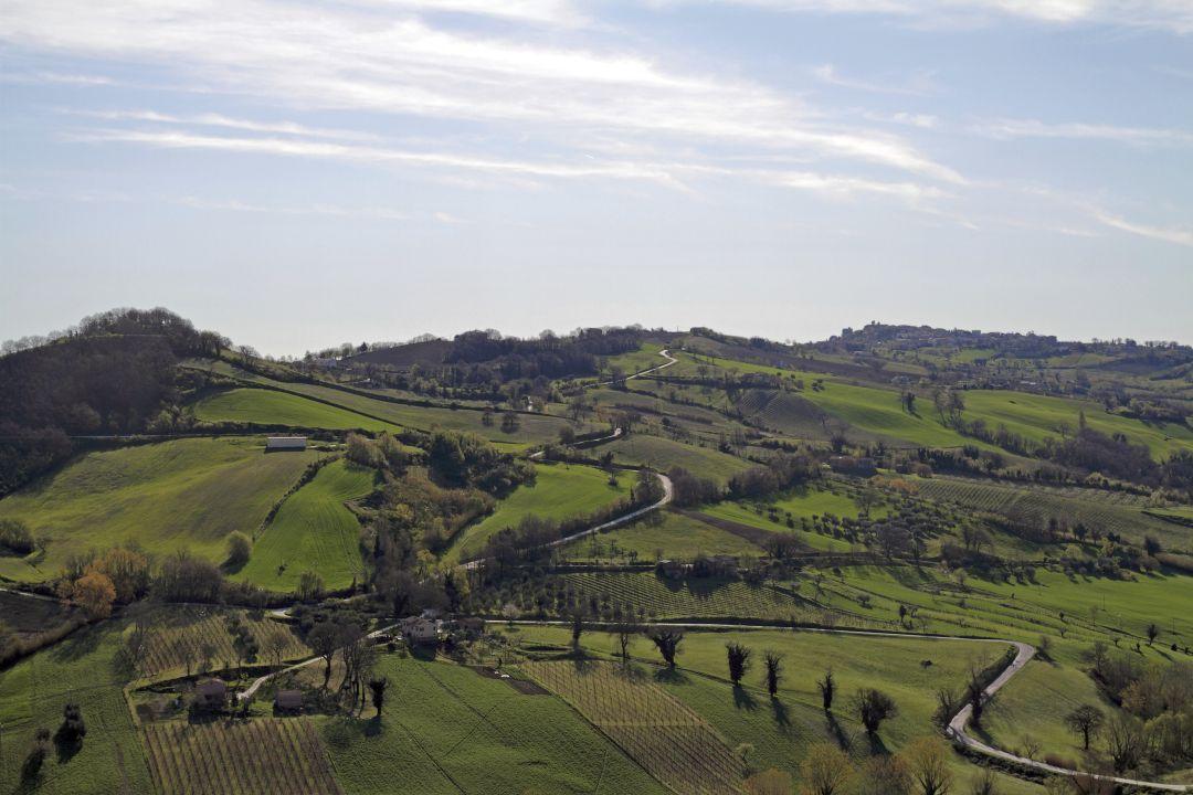 Marche wijngaarden