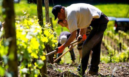 Au Paradis: wijnen uit de Jura en de Beaujolais