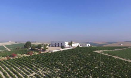 Nieuwe wijntrends in de Jerez-regio