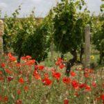 John Bindels – Op naar gifvrije wijn
