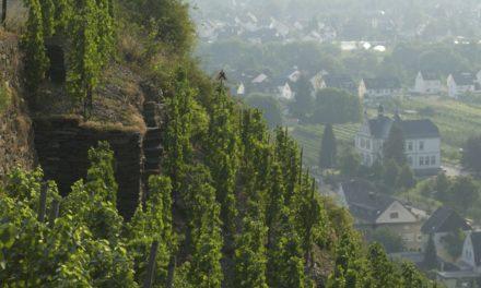 Marc Adeneuer: 'Onze wijnstijl past goed bij de moderne Nederlandse keuken'