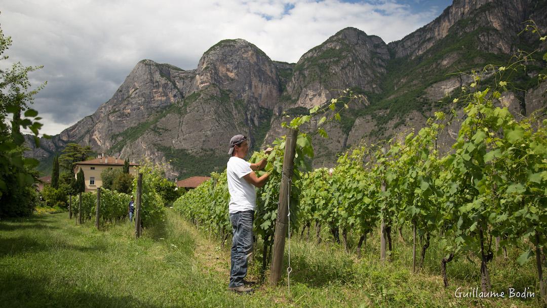 Wijngaarden van Foradori