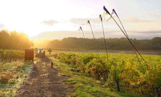 Domaine Clau de Nell: wijnen met spanning