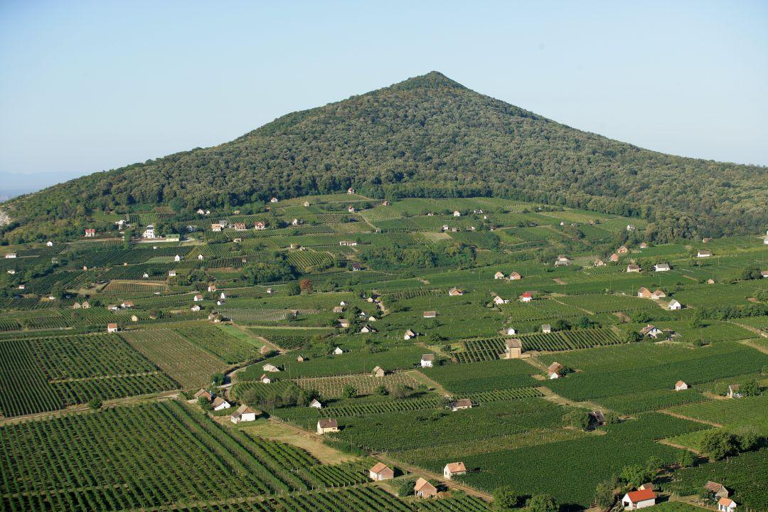 wijngaarden bij Villány
