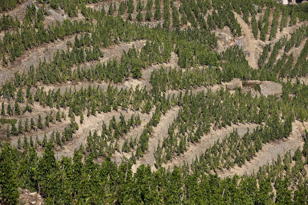 Wijngaarden Côte-Rôtie