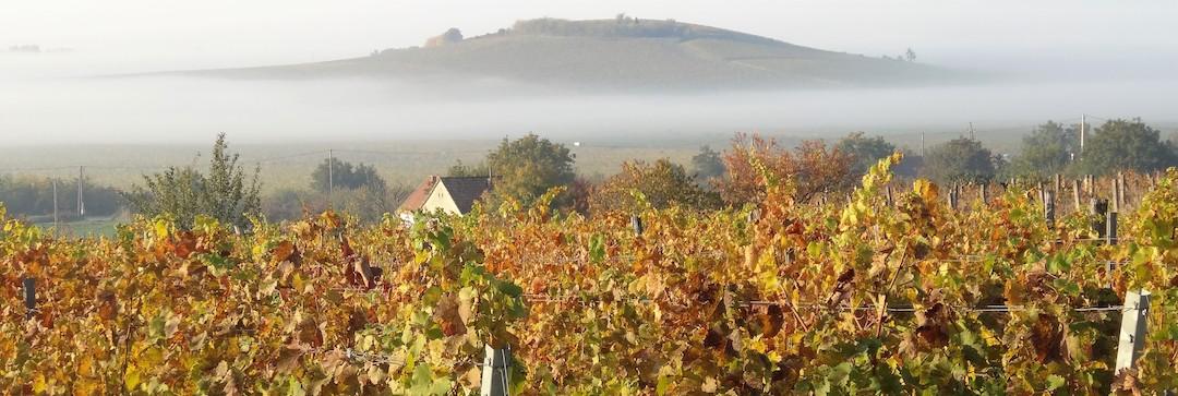 Wijngaarden van Heumann