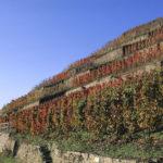 Geslaagde benefietproeverij voor de Ahr-wijnbouwers