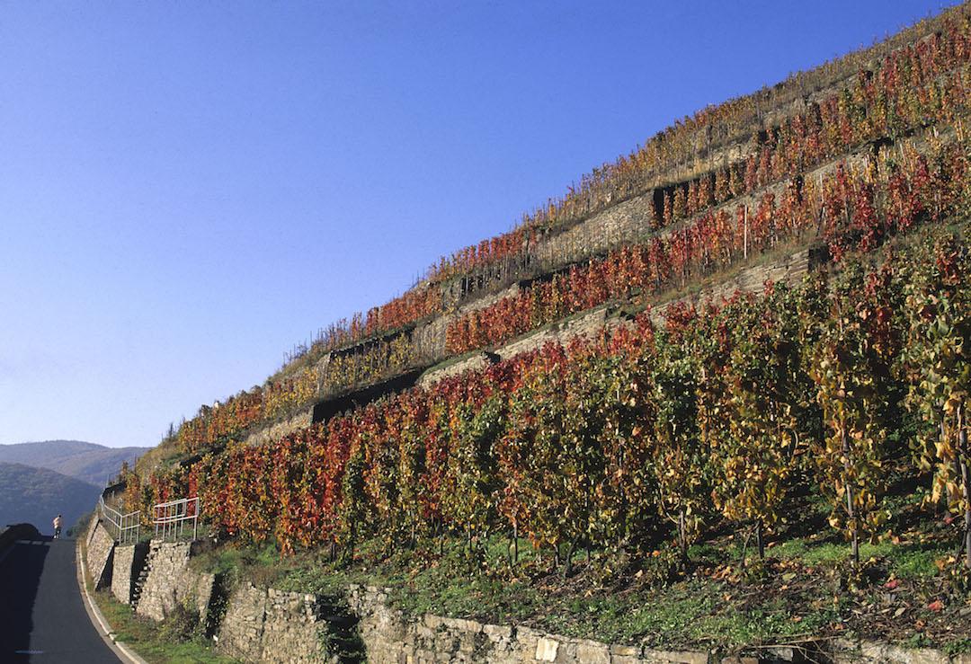 Wijngaarden bij Ahrweiler