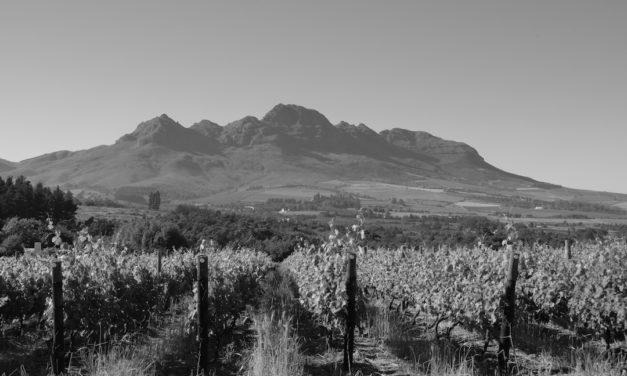 Pinotage, Grangehurst, Stellenbosch, Zuid-Afrika 1997
