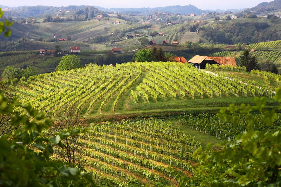 Wijngaarden van Istenič