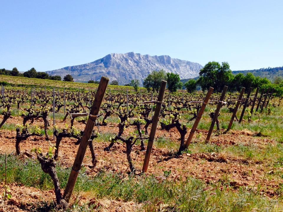 Wijngaard van Henri Bonnaud