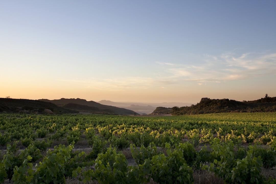 wijngaarden Piekenierskloof