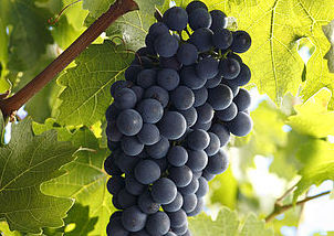 De zes smaken van wijn: bitter