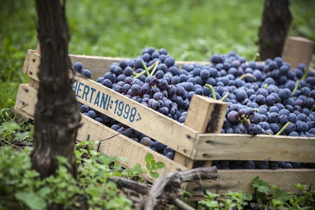 Druiven van Bertani