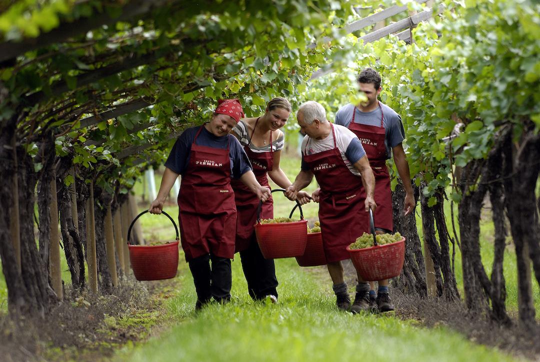 Harvest Castel Firmian
