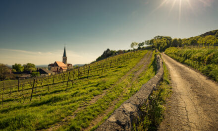 Privat Rot, Weingut Krug, Thermenregion, Oostenrijk 2015