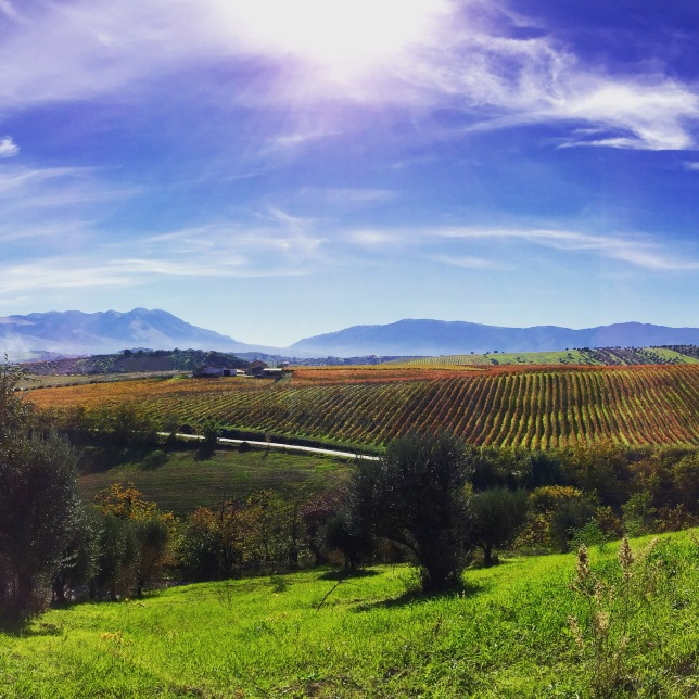 Wijngaarden Tiberio, Abruzzo