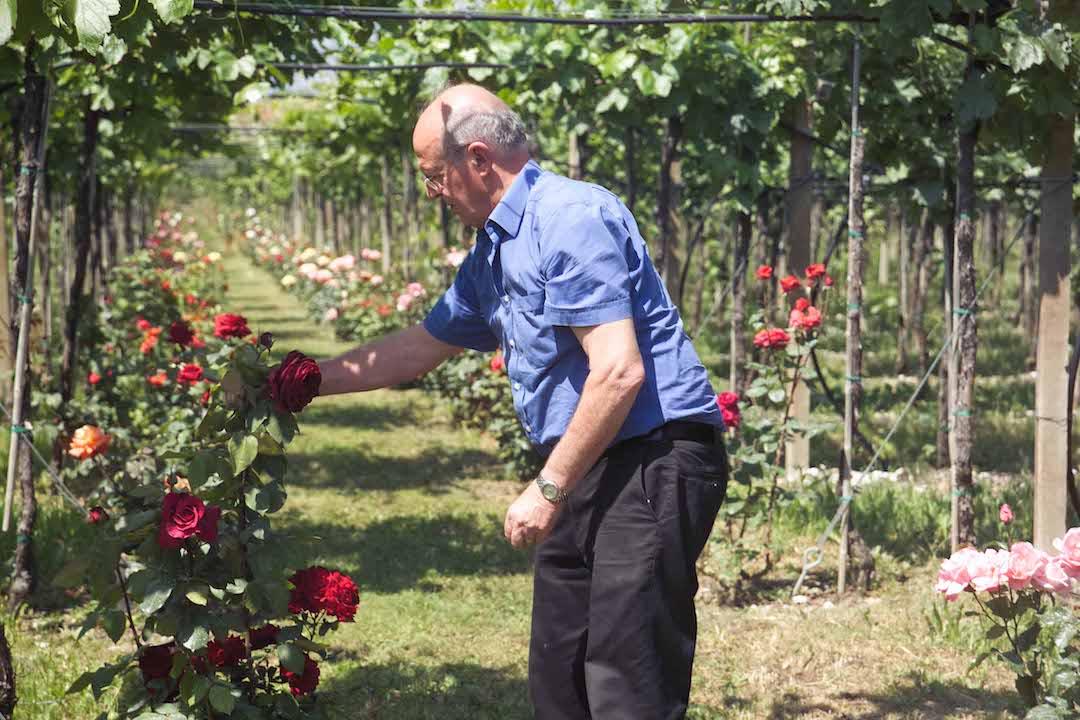 Wijnmaker Gaincarlo Lenotti, Veneto