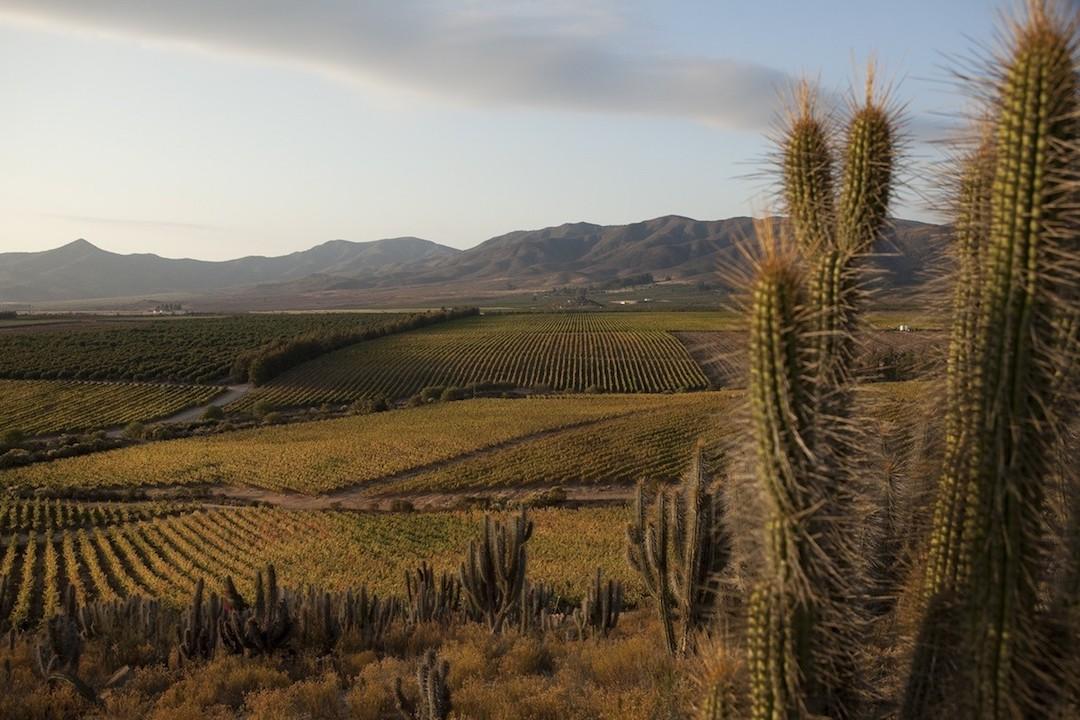 Limari Valley, Chili