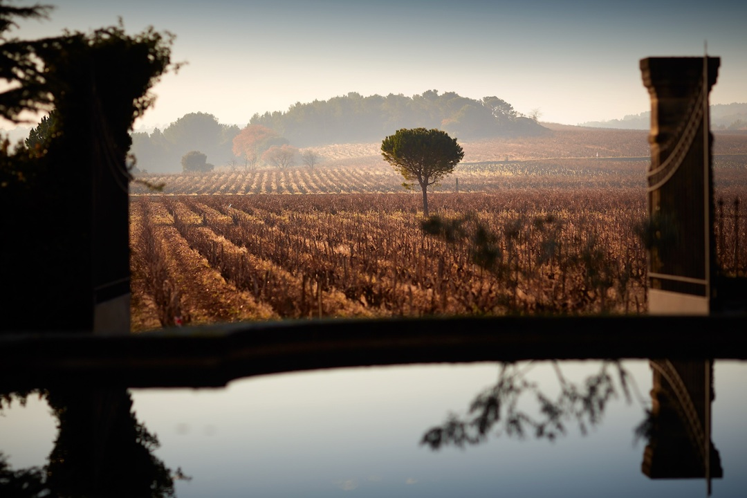 Wijngaarden van Beaucastel