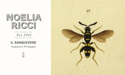 Op zoek naar de identiteit van sangiovese in Emilia-Romagna