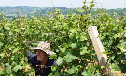 Natuurwijnen uit Servië