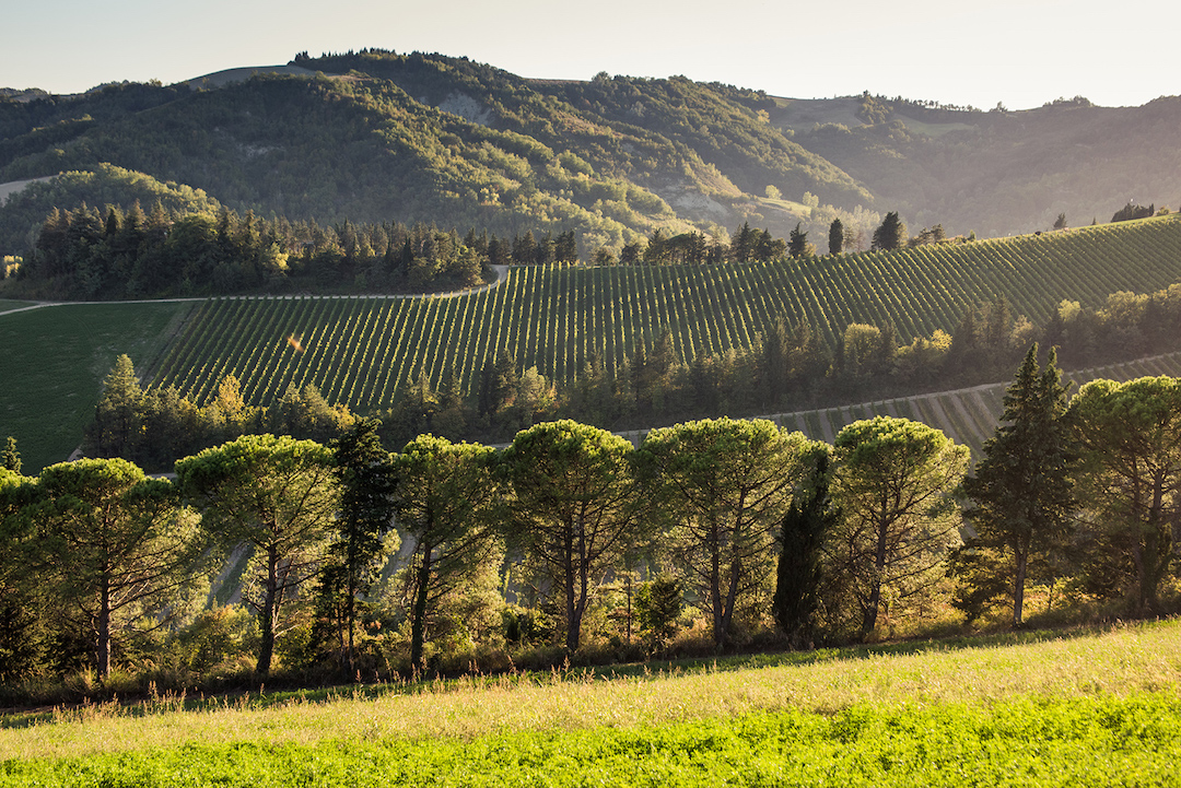Wijngaarden Noelia Ricci