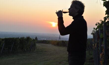 Proefschrift Herfst- & Winterwijnen: de keuze van de importeurs – deel 2