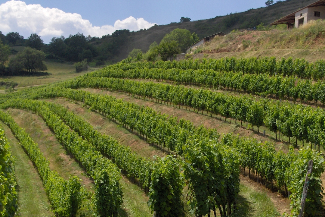 Wijngaarden Domaine du Cros, Marcillac